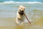 Campsites in UK regions with dog friendly beaches